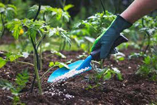 کود سولفات پتاسیم در کشاورزی